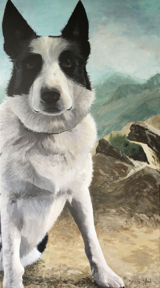 Australian Cattle Dog/Border Collie | Acrylic Painting