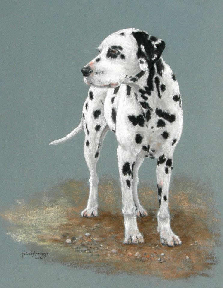 Bonnie the Dalmation | Pastel Drawing